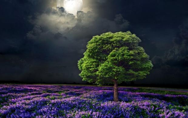 arbre de nit